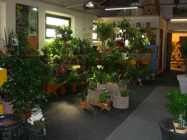 Piante interno anturium asplenium bilbergia caladium for Piante rampicanti ornamentali