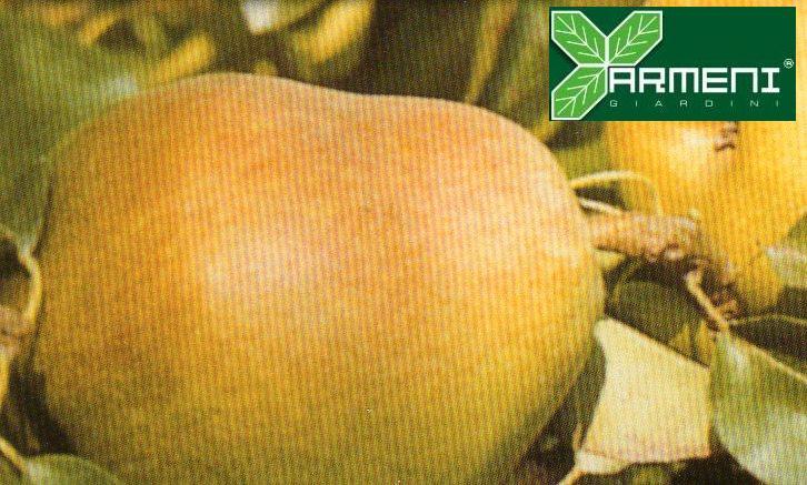 Frutti maggiori piante da frutto vivaio roma for Interno coscia grosso