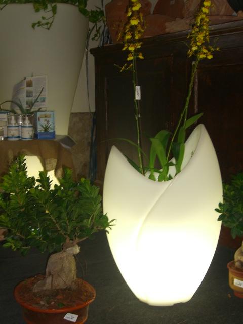 Vasi da interno liena desing per abbellire l 39 ambiente dove - Vasi ornamentali da interno ...