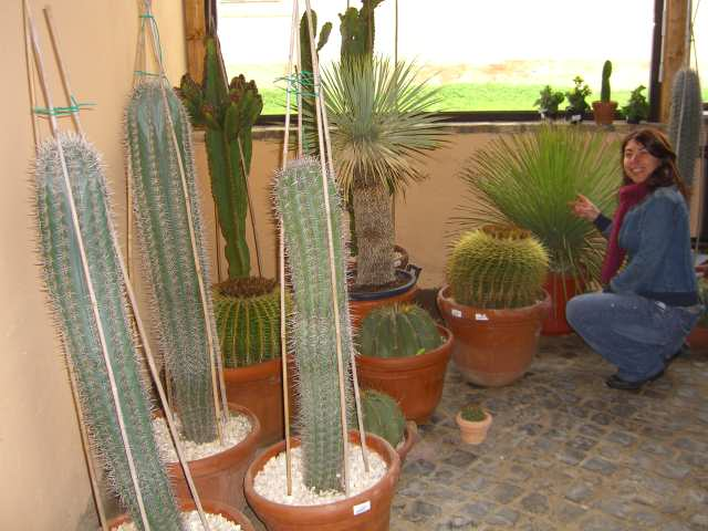 Piante grasse vivaio cactacee succulente pianta grassa for Piante rare