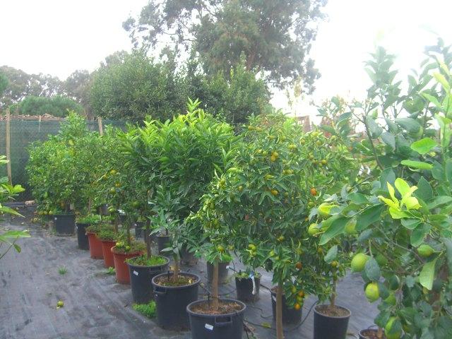 Eventi vivaio calendario mensile dei lavori nel tuo - Calendario trattamenti piante da frutto ...