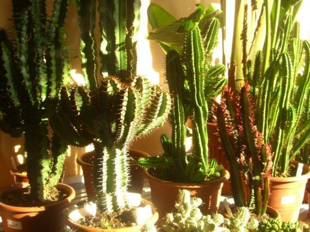 Piante Grasse Da Appartamento: Scopri le piante grasse ...