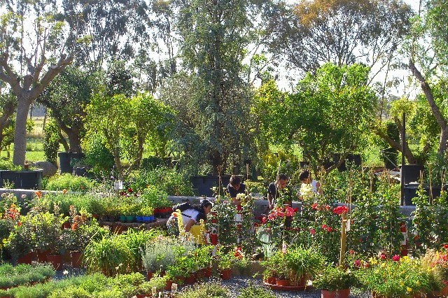 Presso l 39 escusivo vivaio centro giardinaggio punto for Piante e giardini