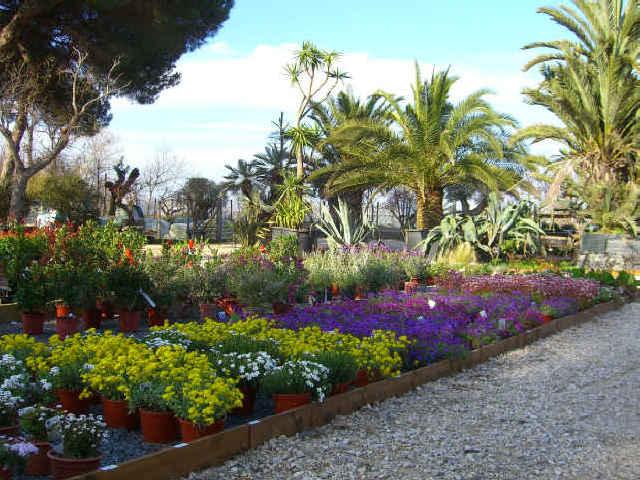 Presso l 39 escusivo vivaio centro giardinaggio punto for Piante da aiuola perenni